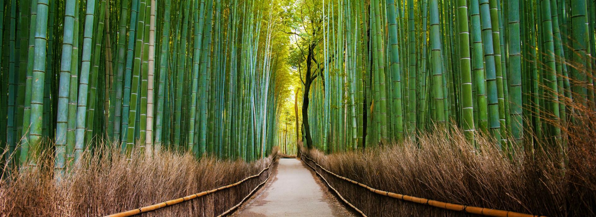 4-BambooForest_Kyoto